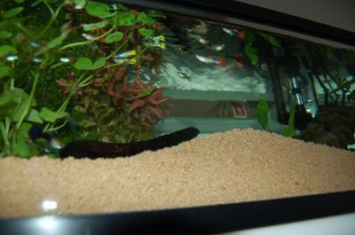 熱帯魚(昼)