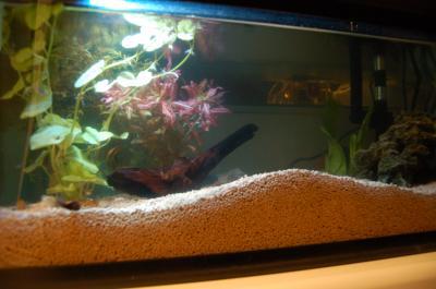 熱帯魚(夜)